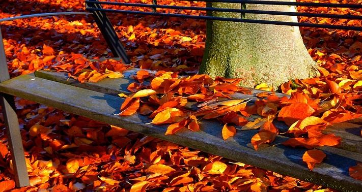 autumno.jpg (183.23 Kb)