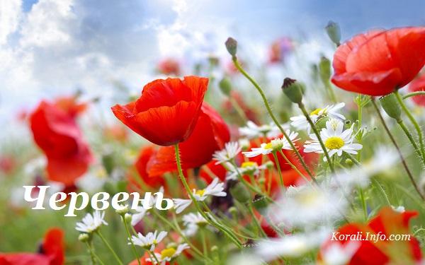 cherven_kalendar_2019.jpg (81 Kb)