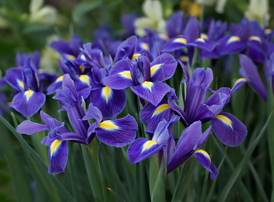 irisi18.jpg (82.29 Kb)