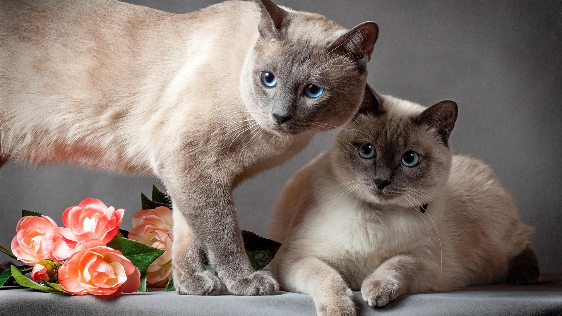 1 березня – День котів!
