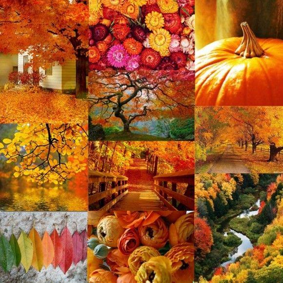 Найтепліші барви осені