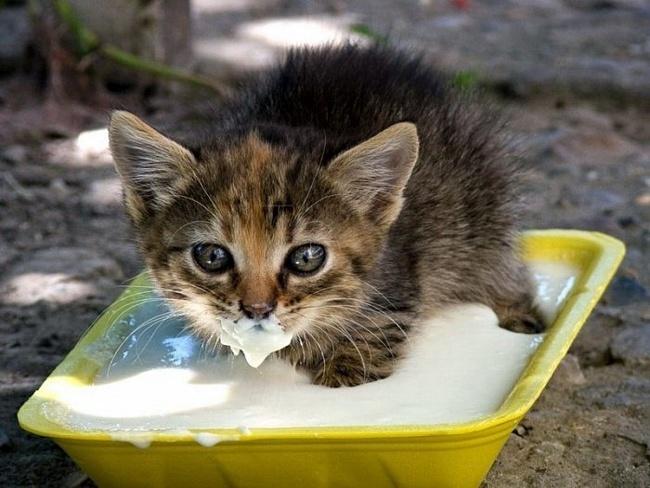 Не все коту Масниця