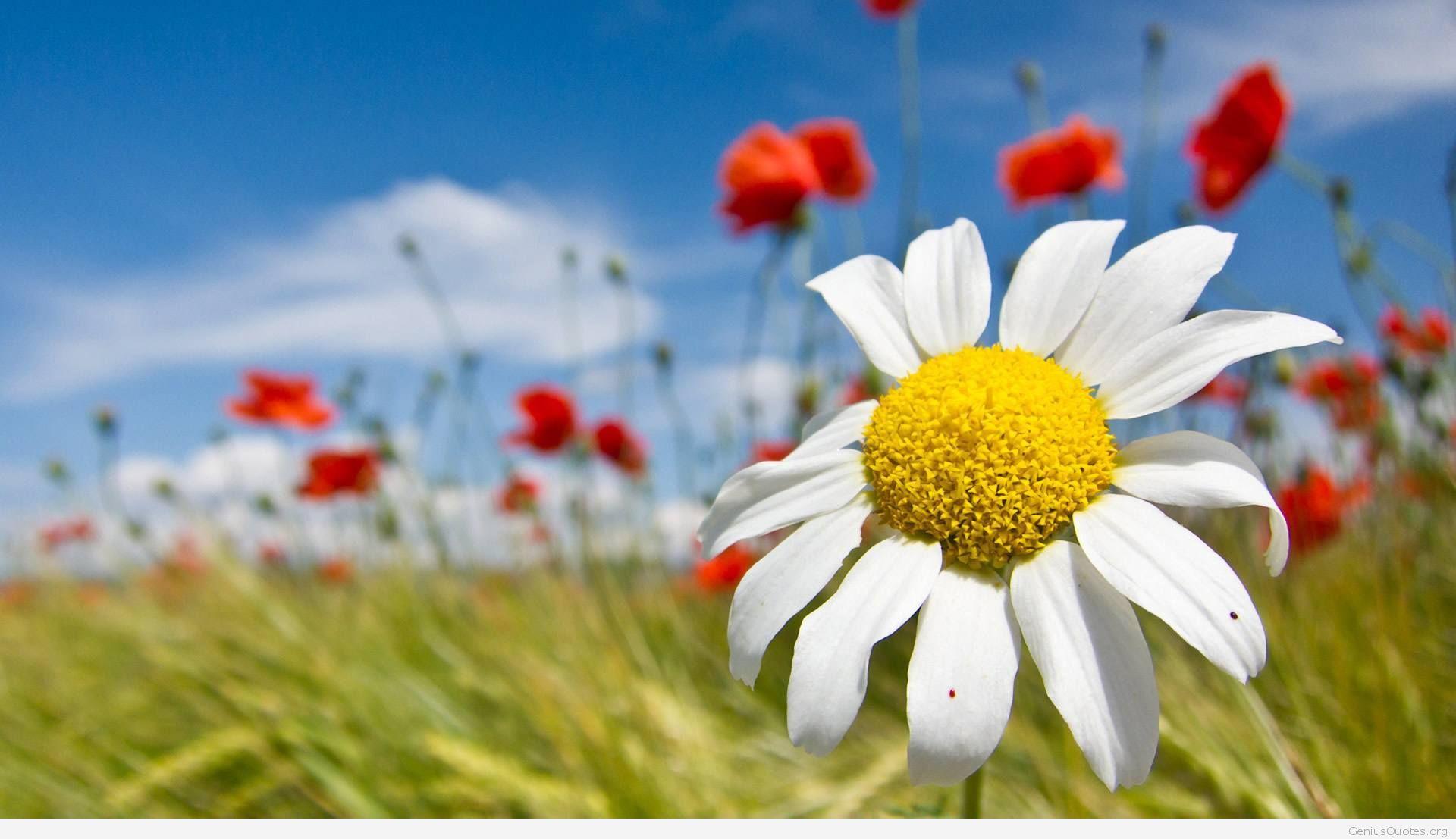 Магія квітів і трав