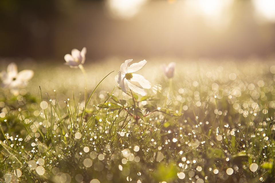 Весна у віршах для дорослих