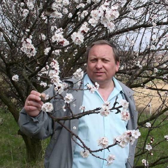 Андрій Юлій Сарва. ДЕРЕВО І ПЕСИК