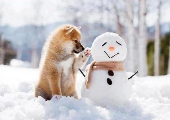 Снігова баба чи сніговик?