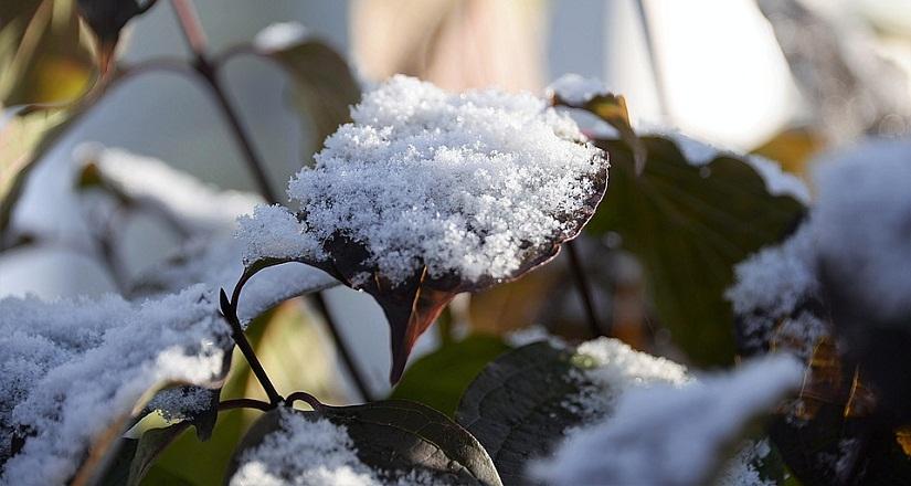 snow1.jpg (112. Kb)