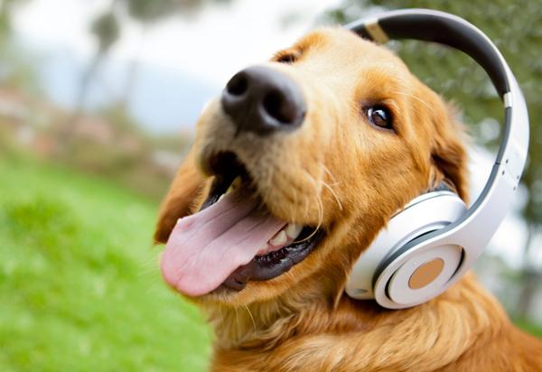 2 липня – міжнародний день собак