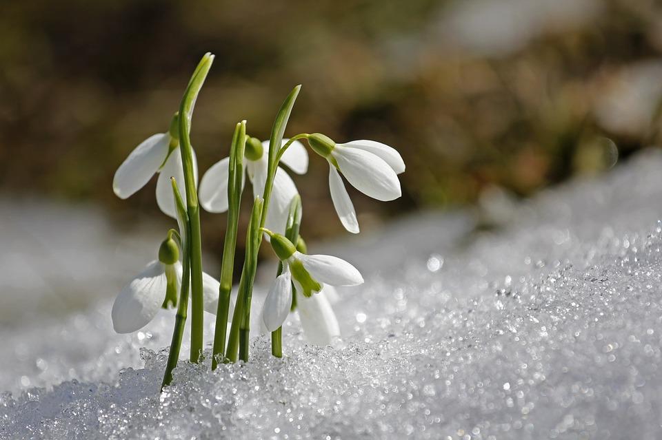 5 надихаючих віршів про весну