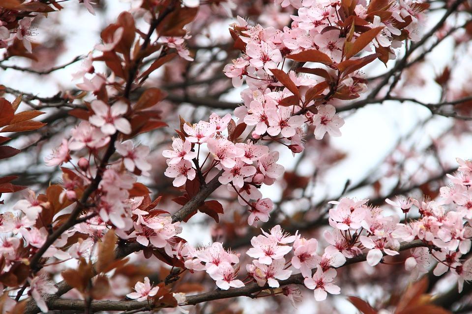 spring-2.jpg (219.38 Kb)