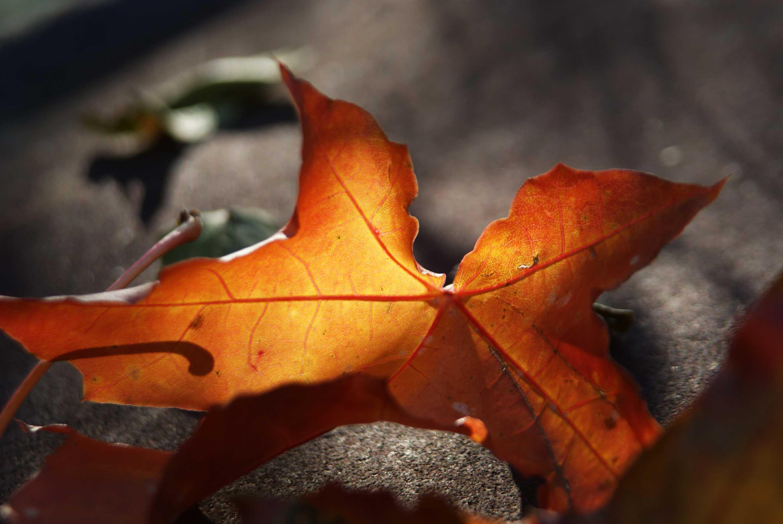 Така пізня така тепла осінь