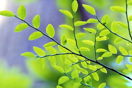 Зелені свята (Трійця)