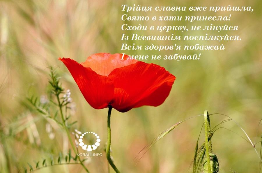 zeleni_svyata_v_kartinkah_2020_3.jpg (139.98 Kb)